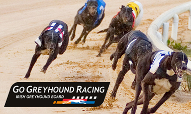 Go Greyhound Racing